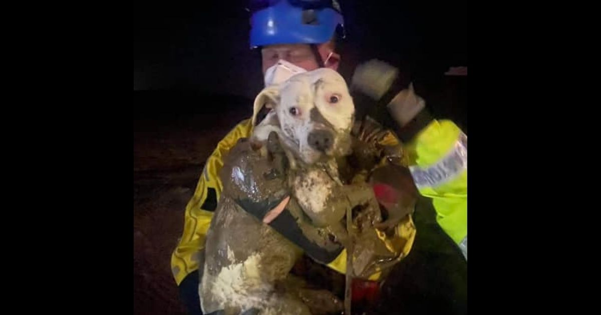 Sasha, a 6-month-old dog, was rescued after getting away from her owners and stuck under a pier.